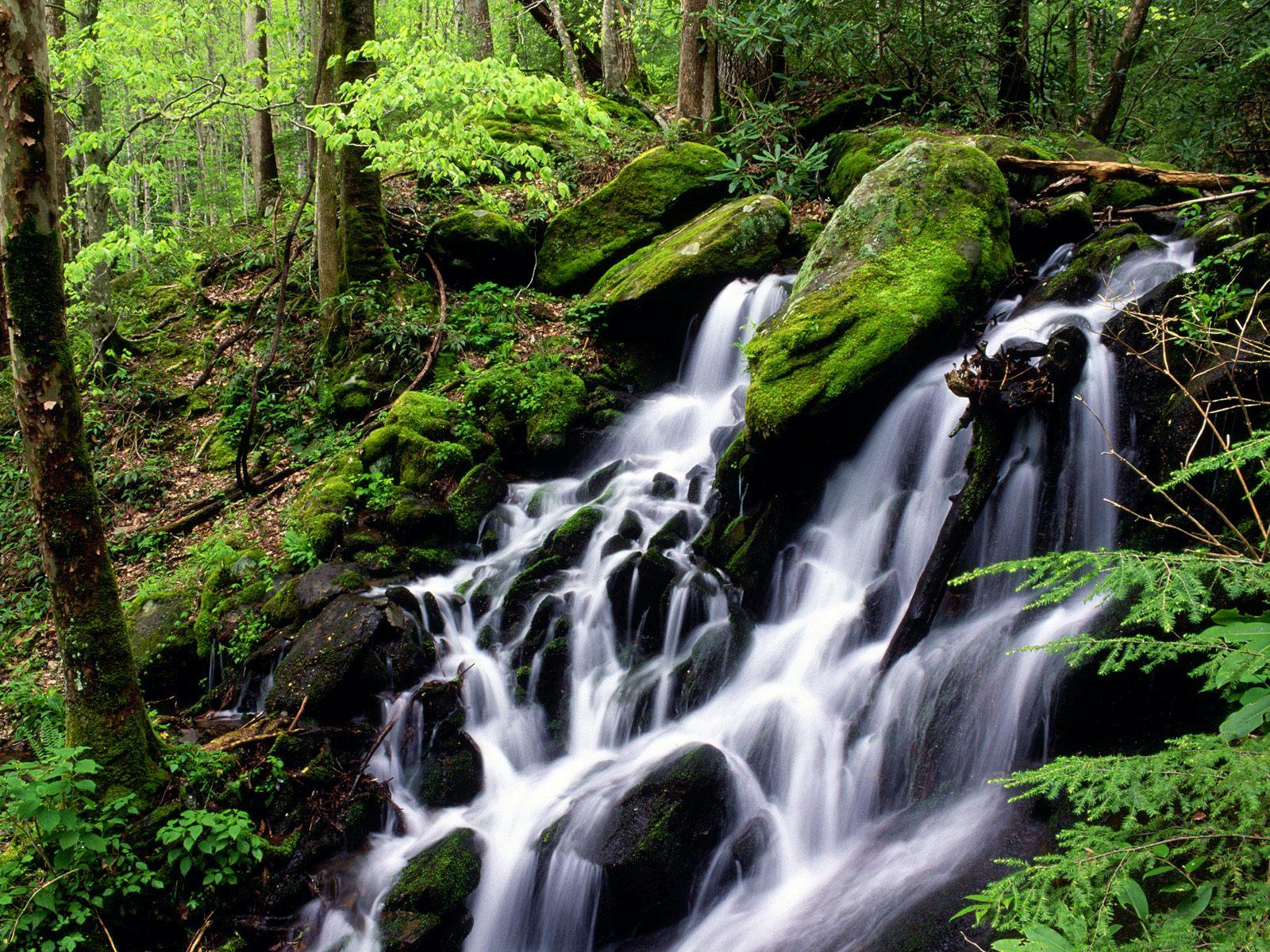 Картинки для блога бесплатно природа